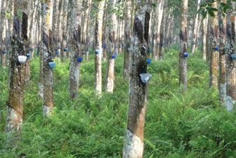 E-agriculture Project in Rubber Industry